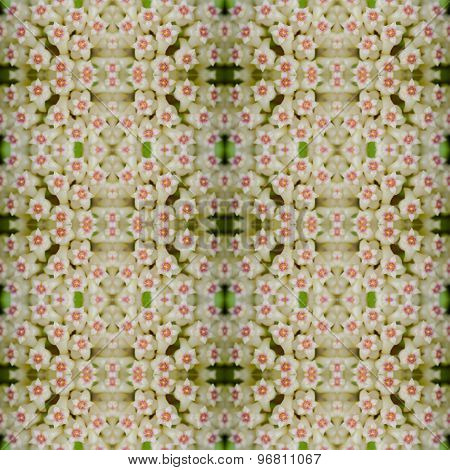 Hoya Flowers Seamless Pattern Background