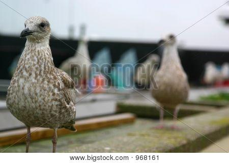 Rooftop Bird