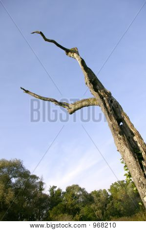 Large Dead Tree