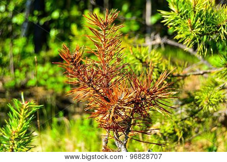 Plants of  taiga.