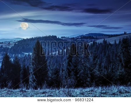 Coniferous Forest In  Mountains At Night