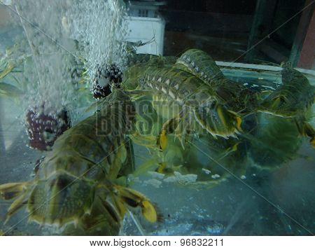 Seafood in fish tank in Malaysia restaurant