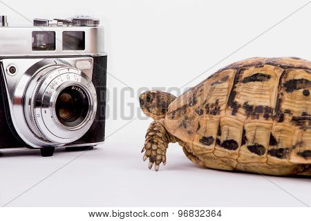 Turtle Looking At An Old Camera