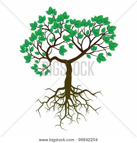 Tree, Roots And Green Leafs. Vector Illustration.