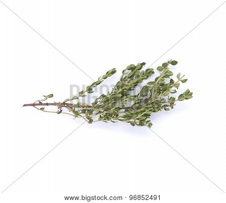 Thyme Branch On A White Background..