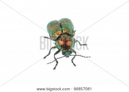 Metal Green Bug On A White Background