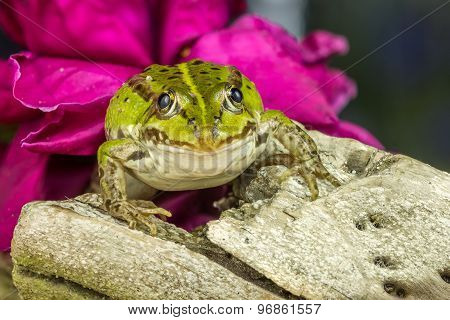 Small Frog On A Tree Branch