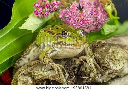 Green Frog Branch