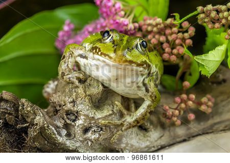 Frog And Branch