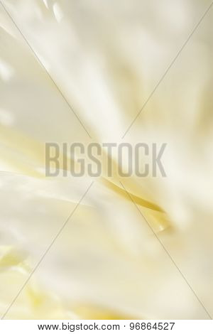 Abstract beautiful gentle spring flower background.  Closeup with soft focus. Sweet color