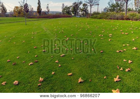 Green lawn at the park