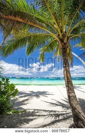 Tropical Beach With Coconut Palm Tree, White Sand And Turquoise Sea Water