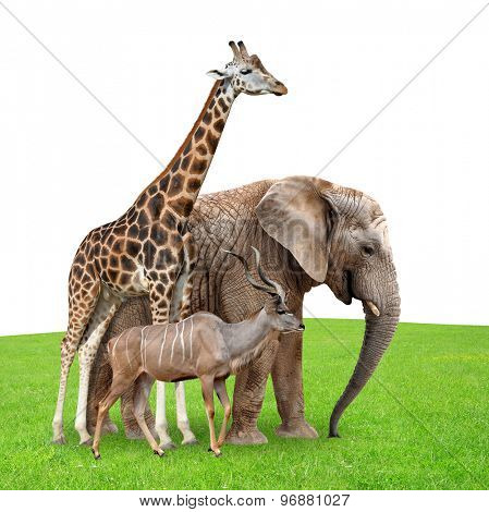 Giraffe, Elephant and Kudu