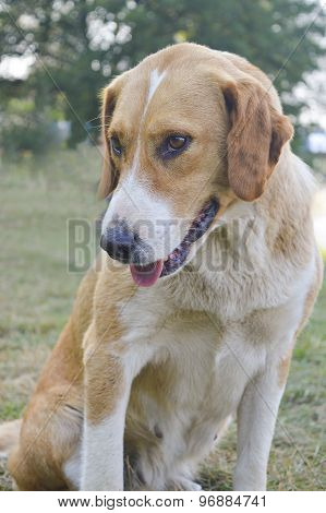 Cute Mixed Breed Dog Givving Friendly Look In The Grass