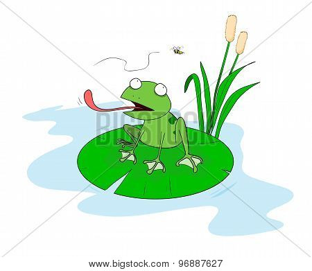 Frog On A Pond