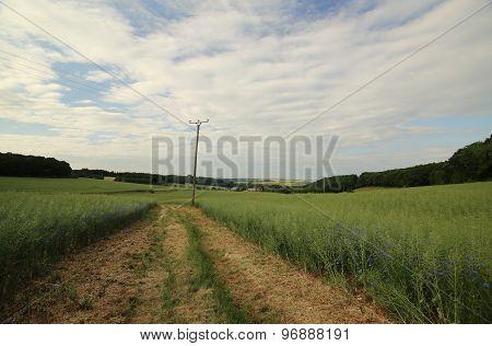 Rapeseed Field Near Siebigerode