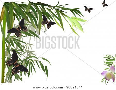 illustration with green bamboo corner and brown butterflies
