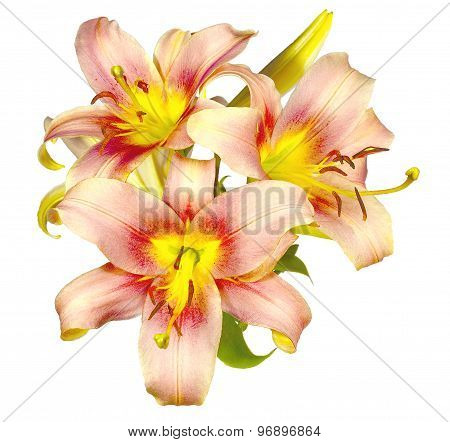 Delicate Lilies Flowers Pink With Yellow