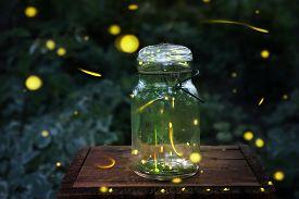 foto of lightning bugs  - Fireflies in a jar - JPG