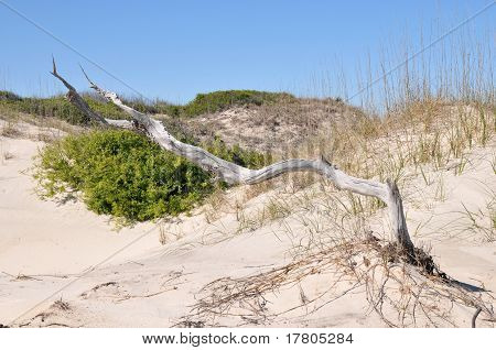 Driftwood In The Dunes