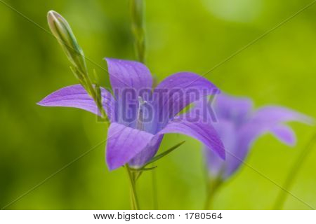 Flower A Handbell