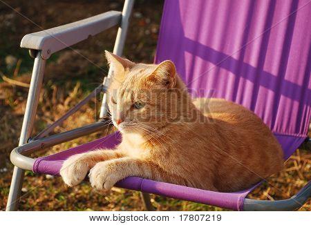 Tom roxo jardim cadeira de gengibre
