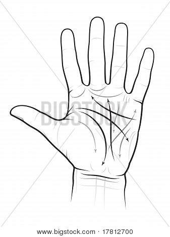 Chiromancy Chart of a Palm (L)