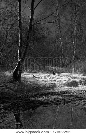 Moonlit patch of ground in a haunted woods