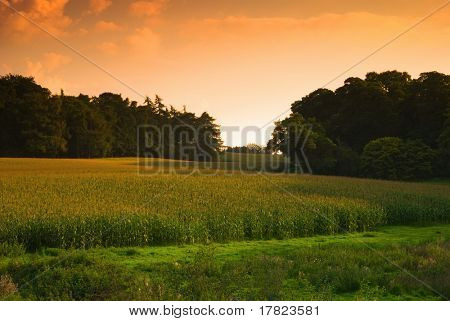 Sun setting over a cornfield, Shropshire, UK