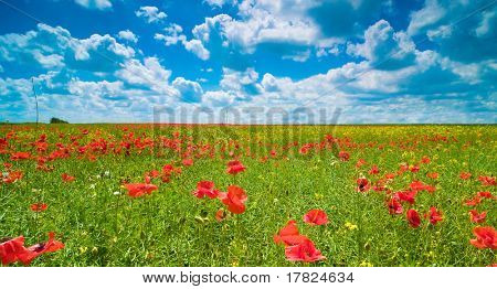 Vibrant poppies in summer field with beautiful sky