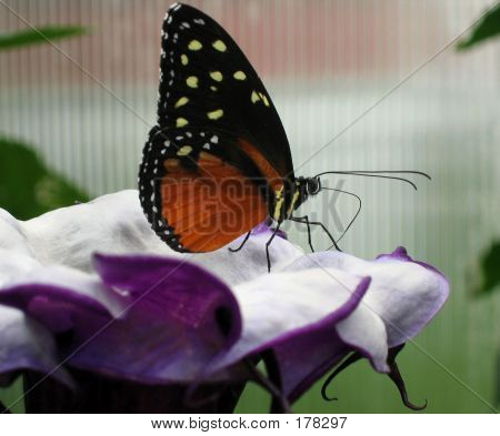 Butterfly And Large Purple Flower