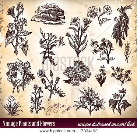 Vintage Plants and Flower with antique distressed sketched look