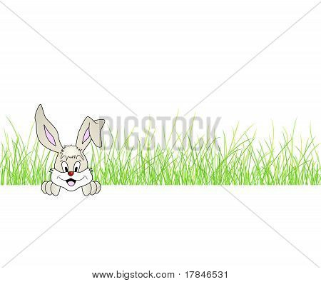 Cute smiling bunny - rabbit sitting in grass