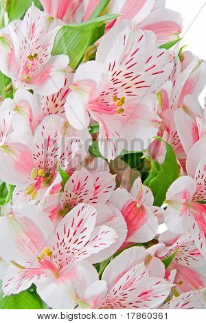 Bouquet Of Alstroemeria Closeup