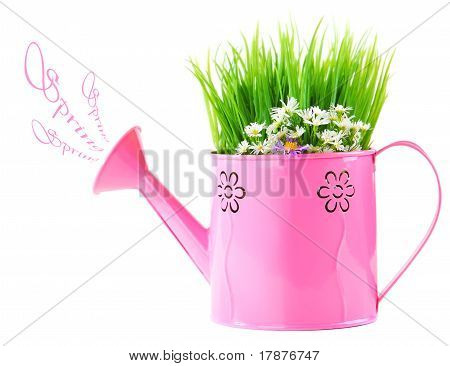 Watering Can Of Fresh Spring Wild Flowers