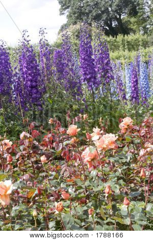 Delphiniums At Alnwick Garden