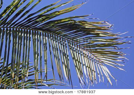 Palm Tree Leaves Blue Sky