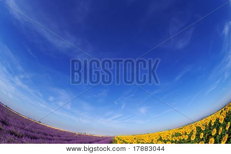 Lavender And Sunflower Fileds Under Blue Sky