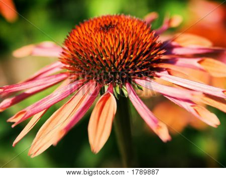 Milllenium Park Flower