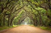 stock photo of marshlands  - Botany Bay Plantation Spooky Dirt Road Creepy Marsh Oak Trees Tunnel with spanish moss on Edisto Island SC - JPG