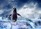 stock photo of water animal  - Penguin on the Ice in water drops - JPG