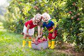 Kids Picking Apples In Fruit Garden poster