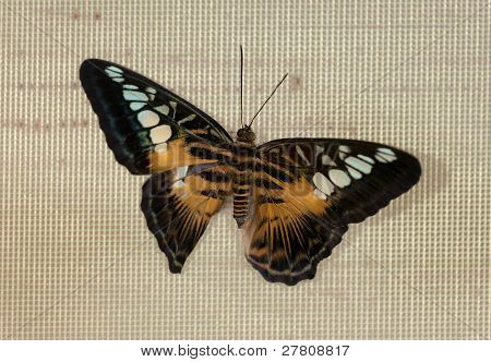 The Butterfly On A Grid