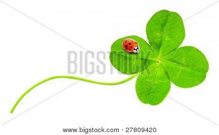 Funny picture of four leaf clover and ladybug.