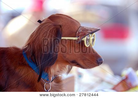 Dachshund wearing a sun visor and sunglasses