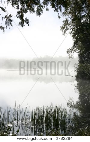 Trees Framing Misty Lake
