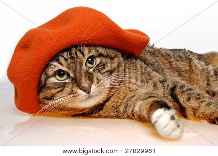 Cat with orange beret