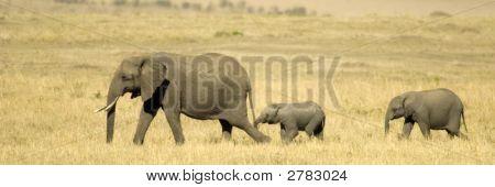 Elefante Africano Quênia de Masai Mara