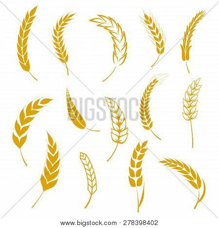 poster of Set Of Simple Wheats Ears Icons And Grain Design Elements For Beer, Organic Wheats Local Farm Fresh