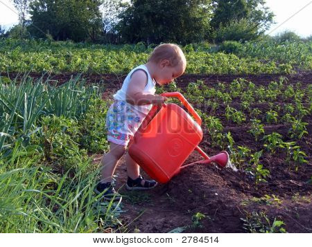 Boy Is Watering Sweet Pepper